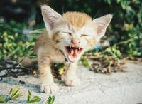 礼拜三:亲,笑多了不怀孕,多笑笑