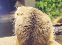 礼拜五:喂喂喂,我是个猫,不是个包!