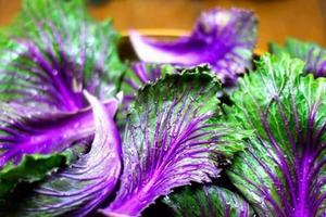 蔬菜怎么吃才有防癌功效,科学家有新发现